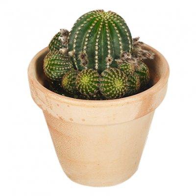 kaktus butik stockholm