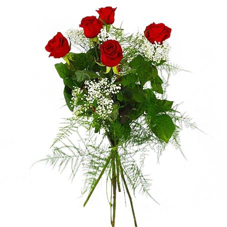 blommor bilder rosor
